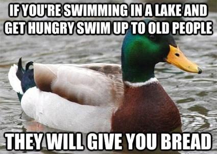 duck Actual Advice Mallard meme bread old people image macro - 6983585280