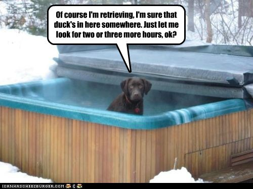 dogs snow lazy labrador retrievers hottub
