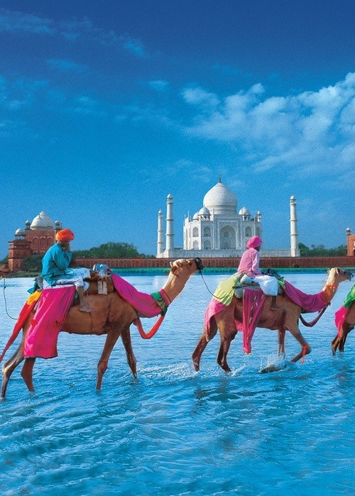 taj mahal,camels,pretty colors