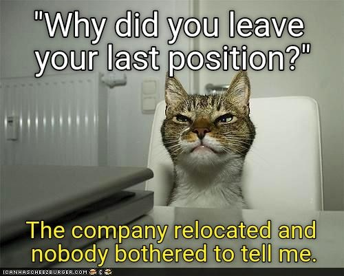 applying job Memes job interview animals - 6984197
