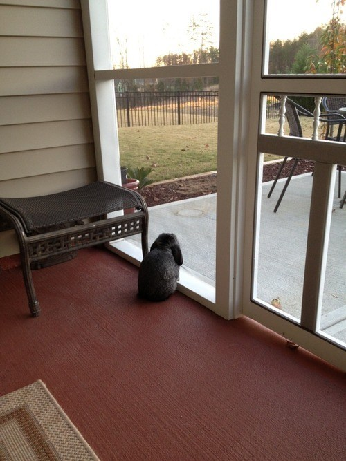 Bunday waiting rabbit bunny squee window