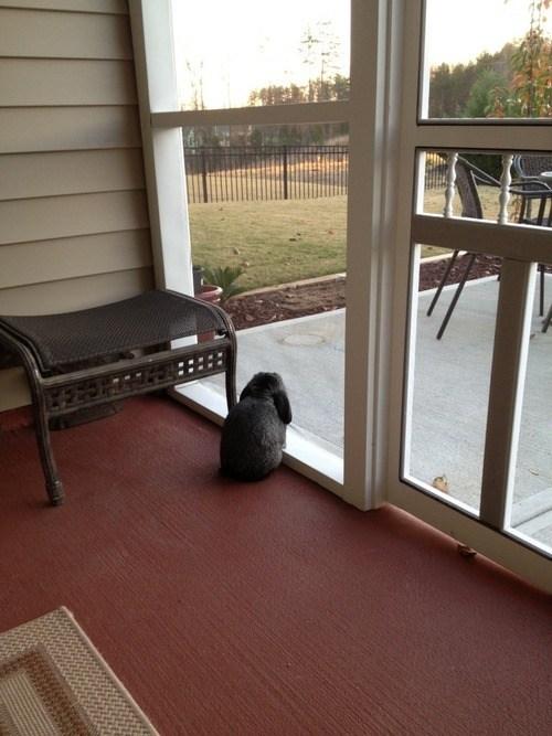Bunday waiting rabbit bunny squee window - 6984217856