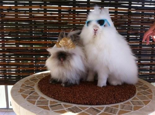 Bunday cool sunglasses rabbit bunny squee hat - 6984250368
