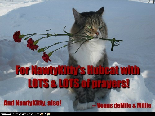 For NawtyKitty's Hubcat with LOTS & LOTS of prayers! And NawtyKitty, also! -- Venus deMilo & Millie