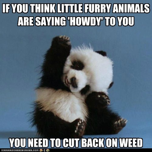 IF YOU THINK LITTLE FURRY ANIMALS ARE SAYING 'HOWDY' TO YOU YOU NEED TO CUT BACK ON WEED