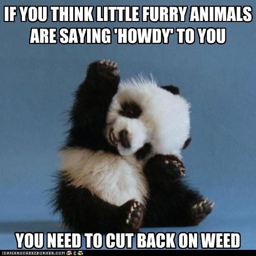 cut back panda furry animals howdy waving weed - 6984759296