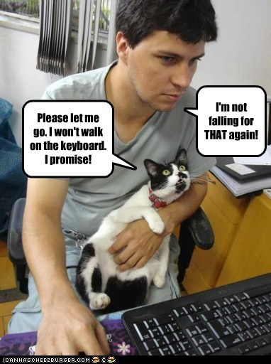 cat computer funny keyboard - 6984786176