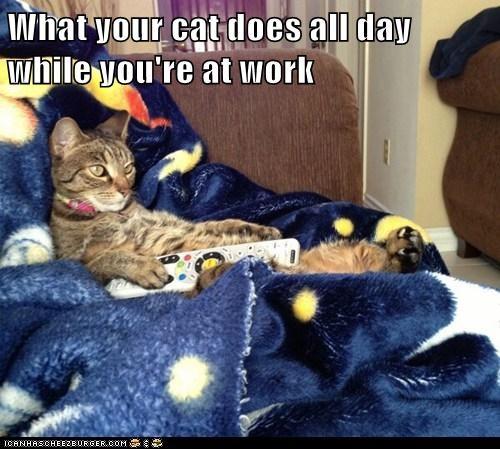 cat TV funny - 6985332480