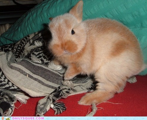 scarf,Bunday,nibble,reader squee,pets,rabbit,bunny,squee