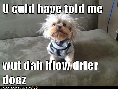dogs blowdryer Fluffy what breed derp - 6985548544