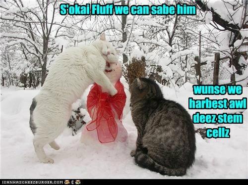 cat snow Cats funny snowman - 6986022656