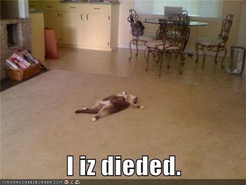 cat,dead,funny