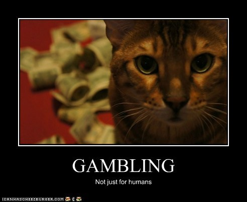 GAMBLING Not just for humans