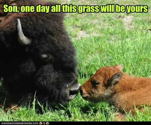 one day,bison,grass,dad,son