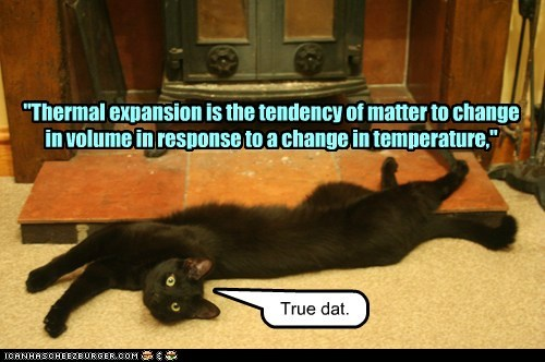 cat physics science funny