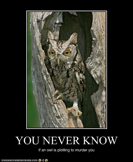 YOU NEVER KNOW if an owl is plotting to murder you