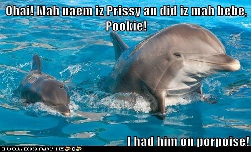 Ohai! Mah naem iz Prissy an did iz mah bebe, Pookie!  I had him on porpoise!