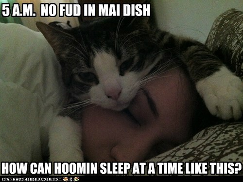 cat human sleep food