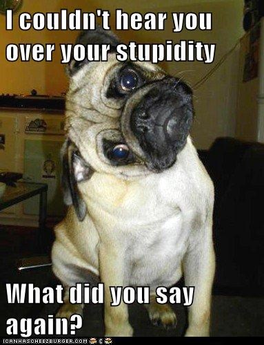 dogs,what did you say,pugs,confused,stupid