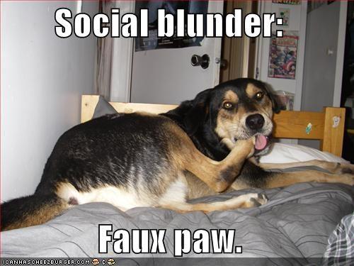 german shepherd paw - 698698496