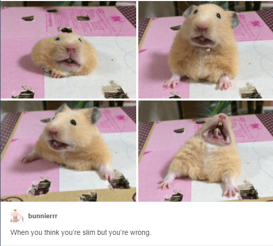 aww tumblr cute hamsters posts funny - 6987013