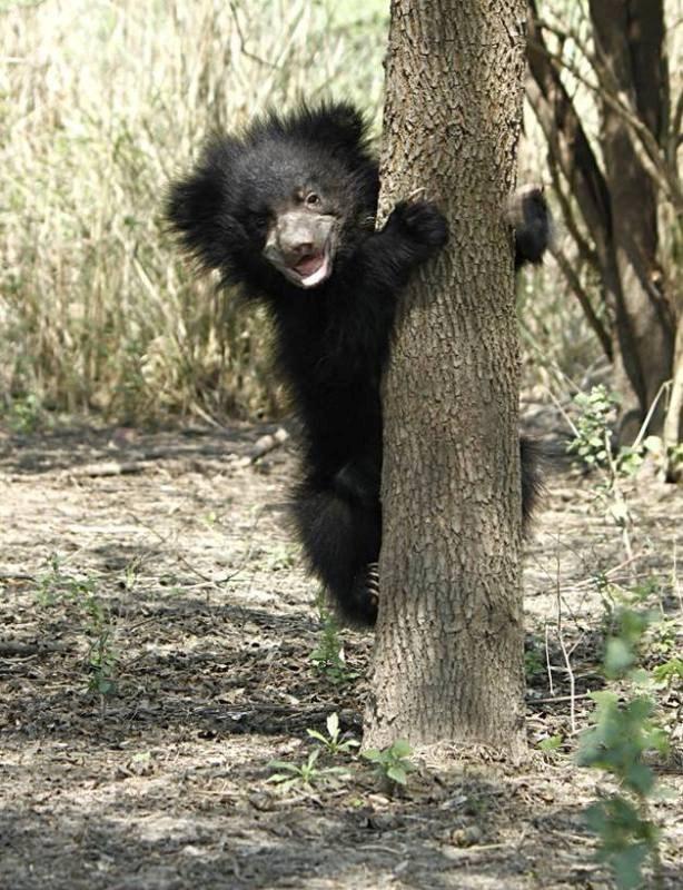 aww bears photos cute sloth - 6988037
