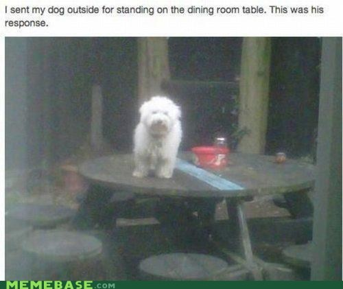 pets table dogs - 6988572416
