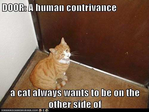 DOOR: A human contrivance  a cat always wants to be on the other side of