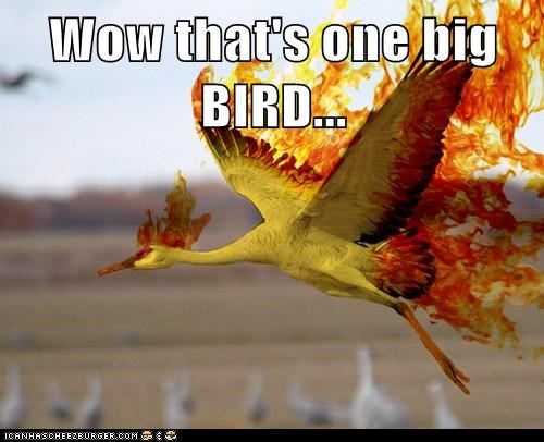 Wow that's one big BIRD...