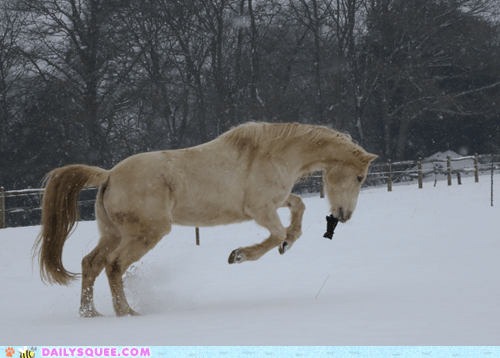 gloves,reader squee,snow,horses,squee
