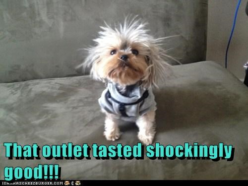 dogs,outlet,shocking,electricity,what breed