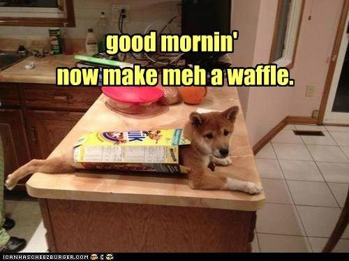 good mornin' now make meh a waffle.