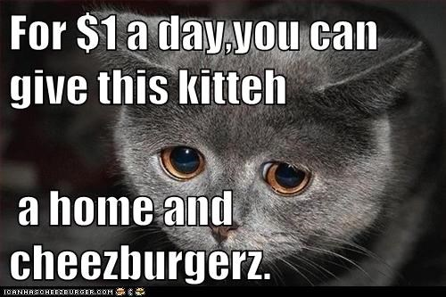 For $1 a day,you can give this kitteh   a home and cheezburgerz.