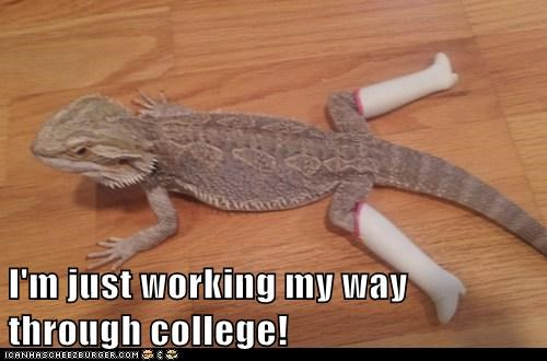 boots,working,lizard,stripping,iguana,college