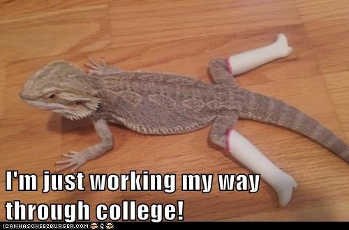 boots working lizard stripping iguana college - 6990060544