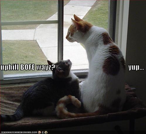 cute Grandpa kitten lolcats lolkittehs - 699056896