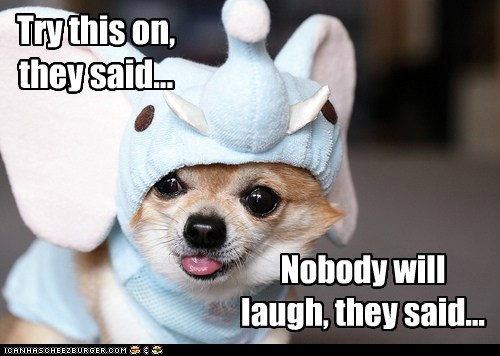 costume dogs elephant chihuahua They Said