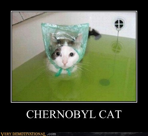 cat chernobyl bath weird
