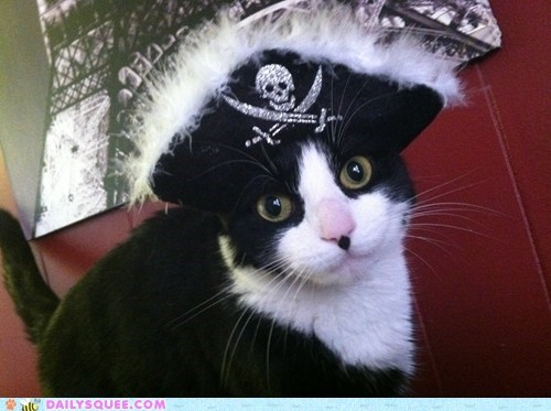 reader squee pets pirates Cats squee - 6991014144