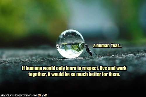 a human tear... If humans would only learn to respect, live and work together, it would be so much better for them.