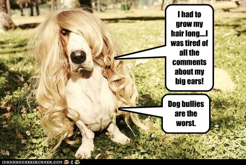 I had to grow my hair long....I was tired of all the comments about my big ears! Dog bullies are the worst.