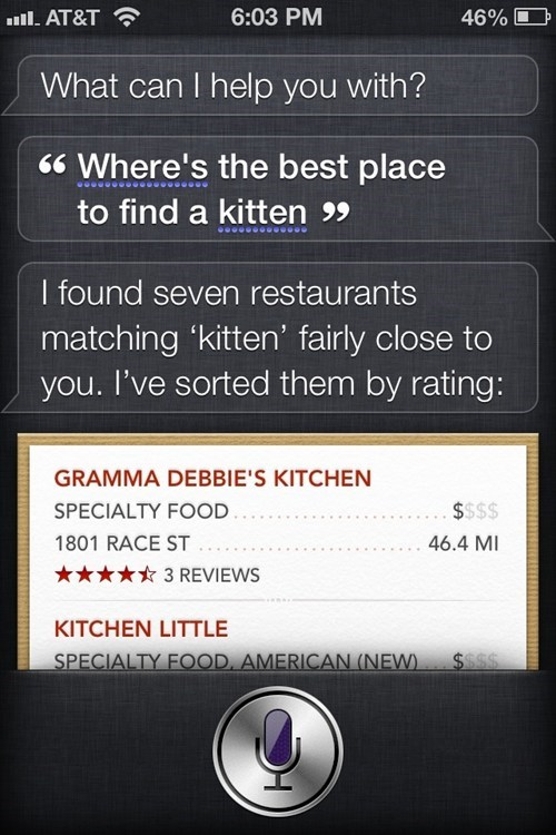 kitten,siri,restaurants,eating