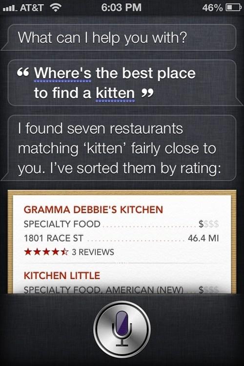 kitten siri restaurants eating - 6991179008