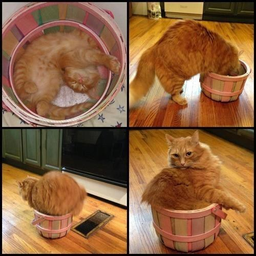 fit growing up kitten if it fits Cats basket