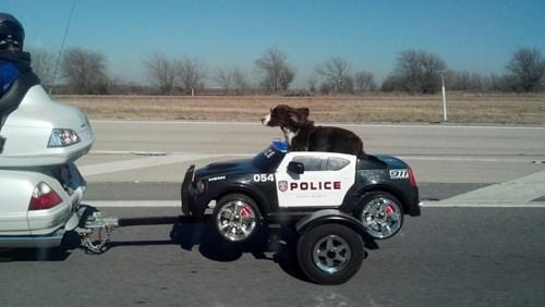 police dog k9 motorcycle police - 6991256320