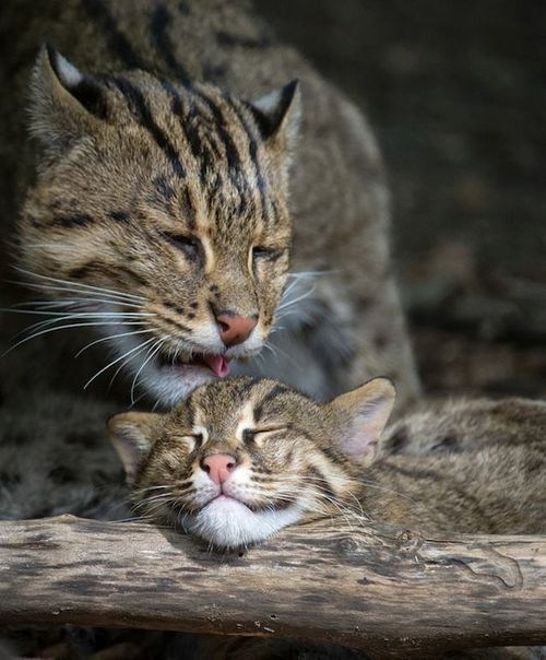 baby,bath time,grooming,swimming,mommy,fishing cat,squee spree