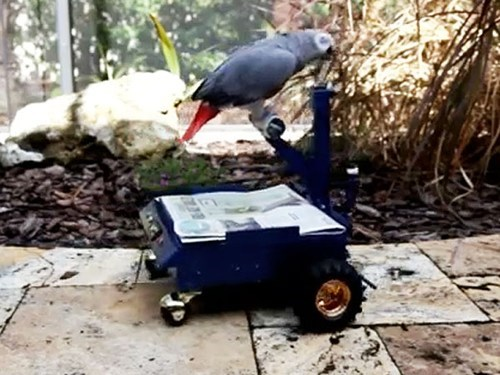 car people pets invention bird funny parrot - 6992004608