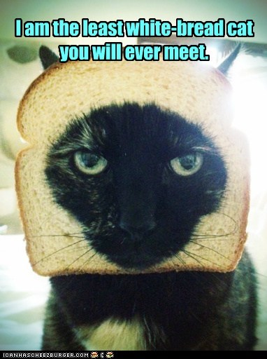 I am the least white-bread cat you will ever meet.