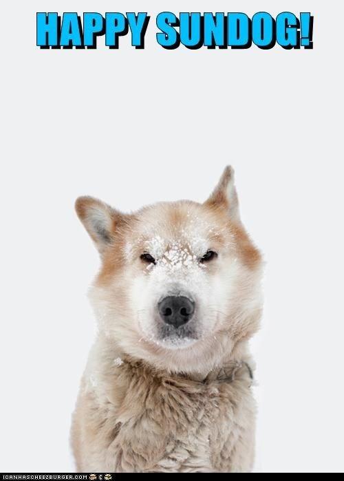 dogs happy sundog snow husky huskie Sundog - 6992132608