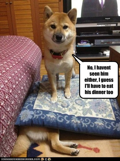 dogs cheating dinner gimme shiba inus hiding